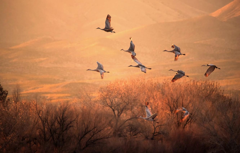 Photo wallpaper light, trees, birds, flight, cranes