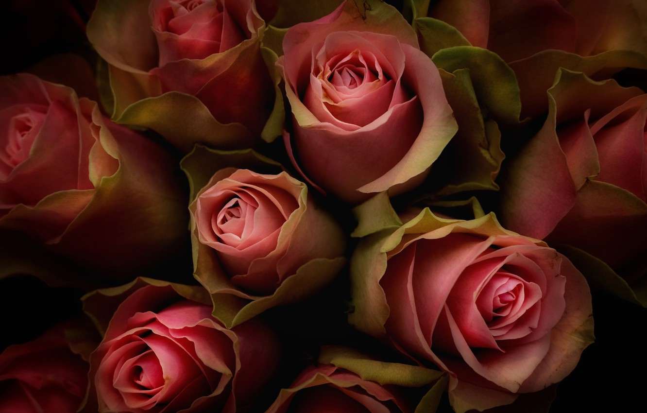 Photo wallpaper macro, roses, bouquet, buds