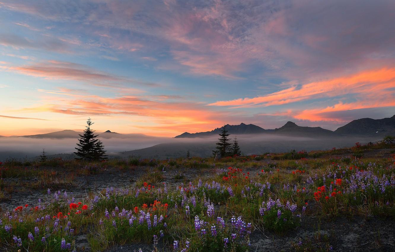 Photo wallpaper field, sunset, flowers, nature, beauty, harmony