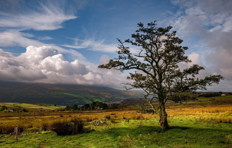 Photo wallpaper clouds, tree, valley, Wales, Nantl