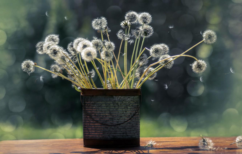 Photo wallpaper flowers, background, dandelions