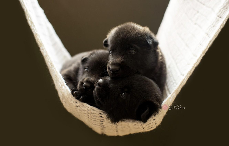 Photo wallpaper dogs, comfort, puppies