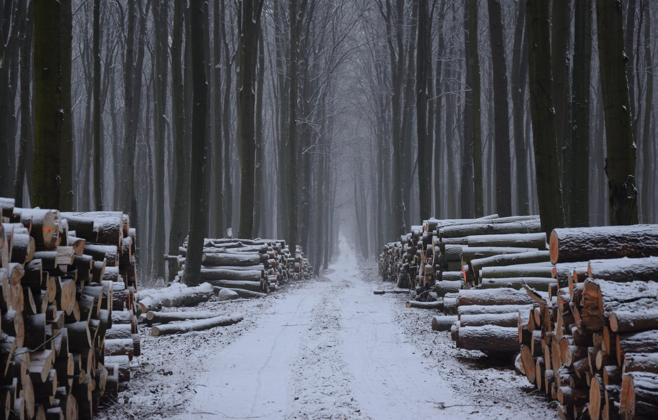 Photo wallpaper winter, forest, wood