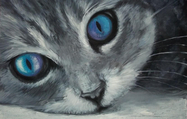 Photo wallpaper cat, muzzle, blue eyes