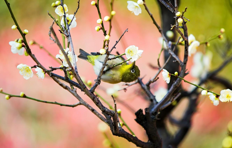 Photo wallpaper nature, tree, bird