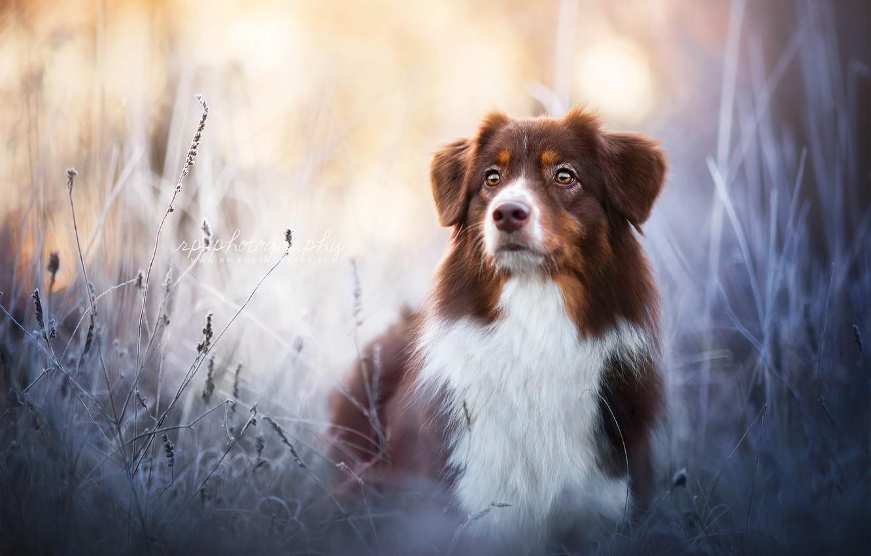 Photo wallpaper look, nature, dog
