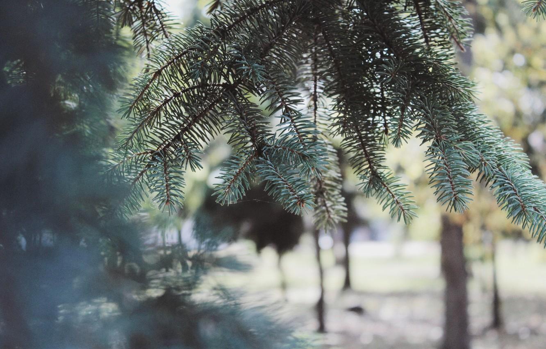 Photo wallpaper autumn, the sun, nature, comfort, tree, canon 600d