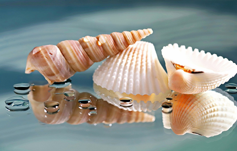 Photo wallpaper drops, macro, reflection, background, shell