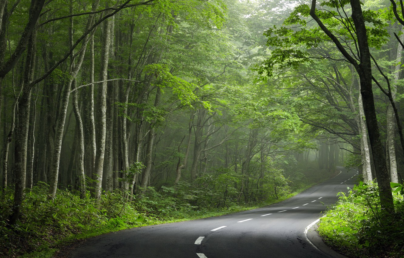 Photo wallpaper road, forest, turn