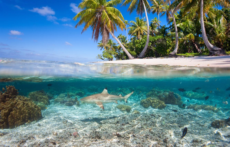 Photo wallpaper water, tropics, palm trees, corals