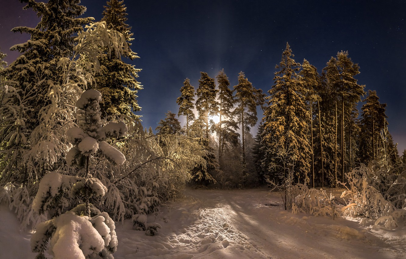 Photo wallpaper winter, forest, snow, trees, night, the moon, pine