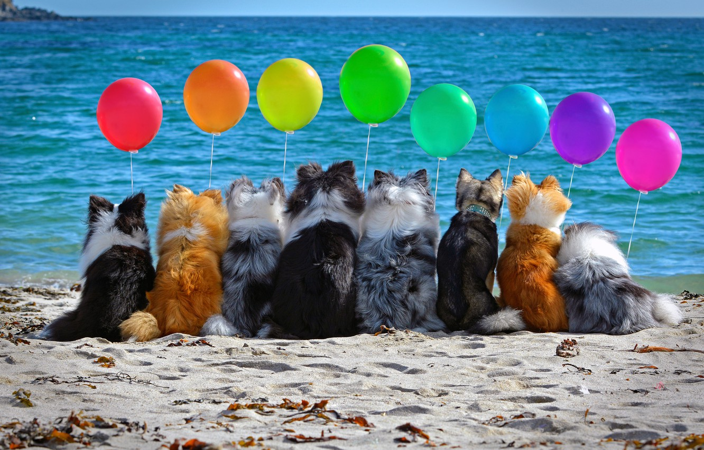 Photo wallpaper sand, sea, dogs, beach, mood, balls, company, colorful, balloons