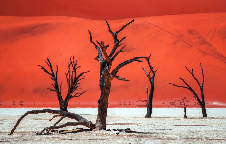 Photo wallpaper trees, nature, desert