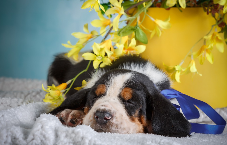 Photo wallpaper flowers, background, animal, puppy