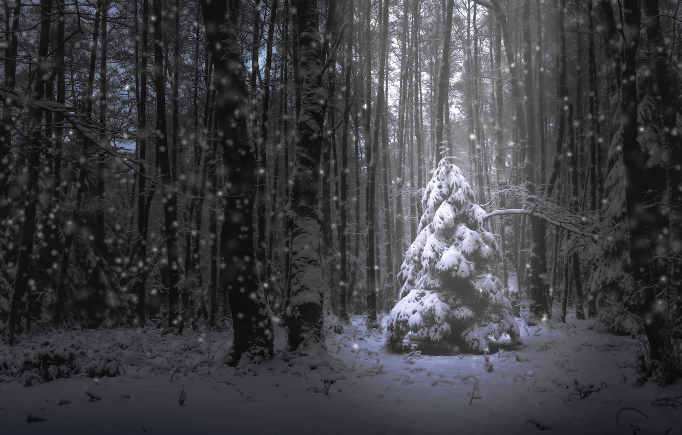 Photo wallpaper forest, snow, tree