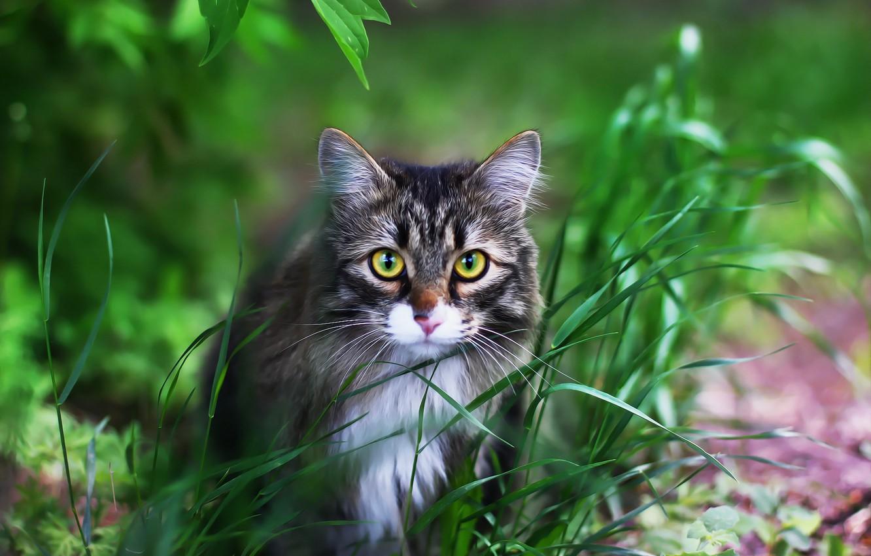 Photo wallpaper cat, background, face, cat