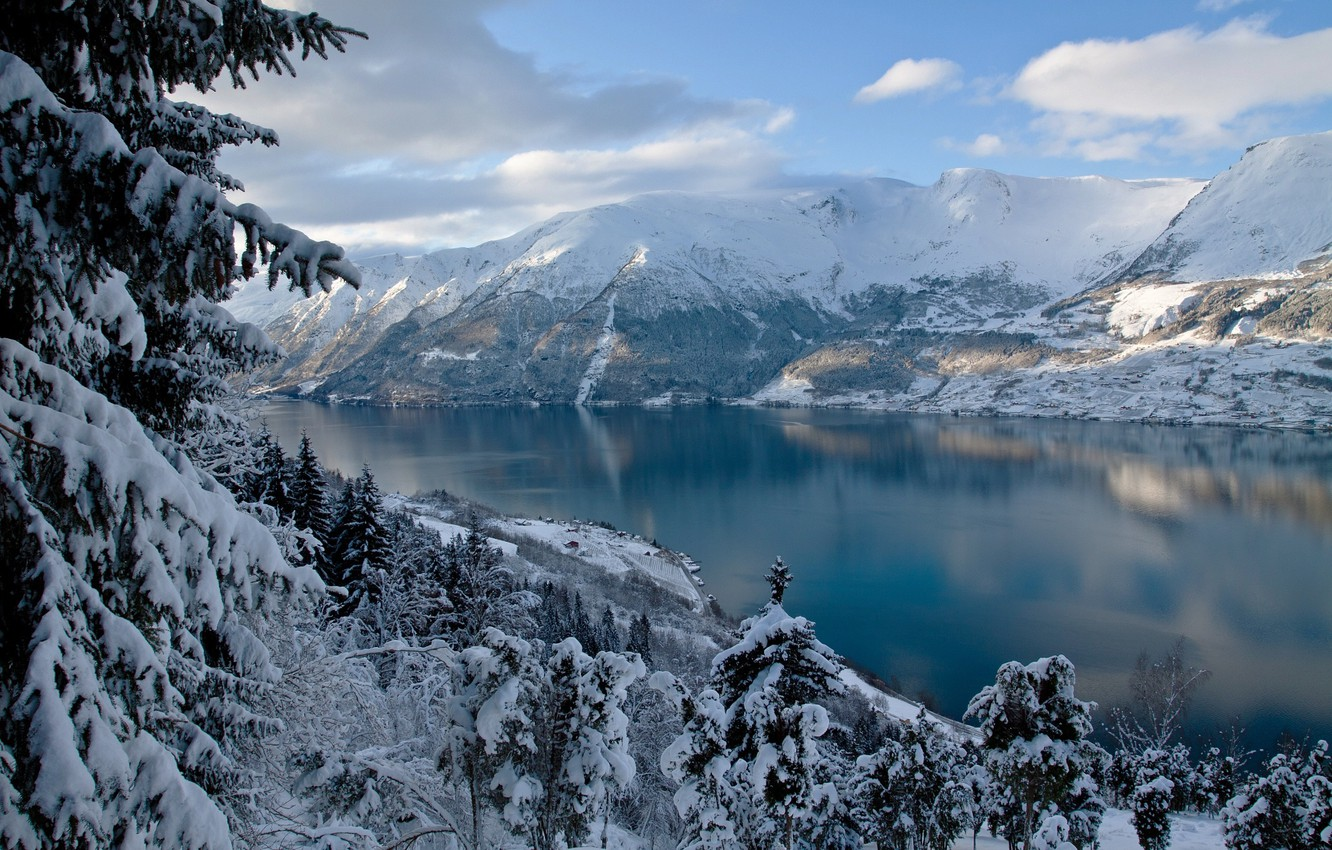Photo wallpaper winter, forest, trees, mountains, nature, ate, Norway, the fjord