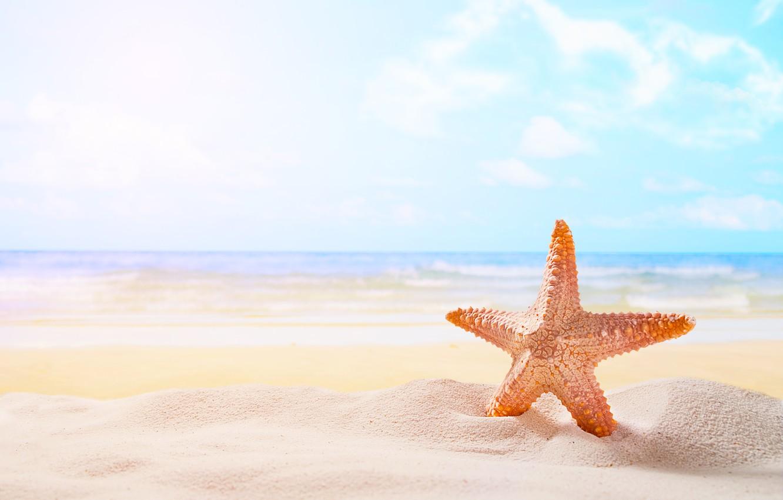 Photo wallpaper sand, sea, beach, star, summer, beach, sea, sand, starfish