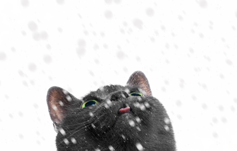 Photo wallpaper cat, look, snow