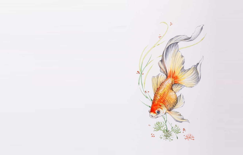 Photo wallpaper algae, figure, fish, art, goldfish