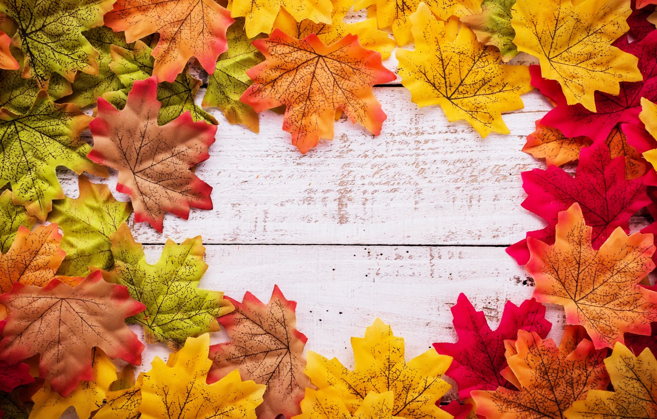 Wallpaper Autumn Leaves Background Tree Wood Background