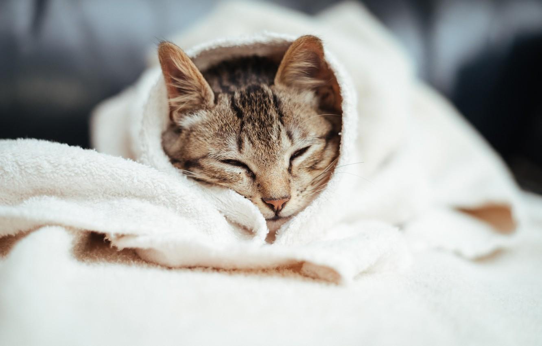Photo wallpaper cat, cat, sleeping
