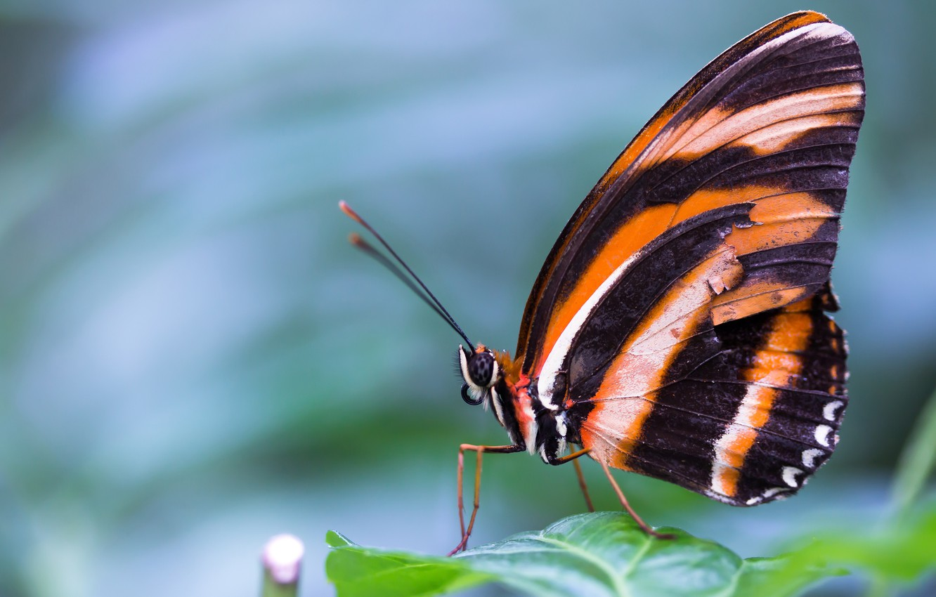 Wallpaper Macro Butterfly Orange Insects Nature Background Blue Butterfly Black Leaf Insect Striped Images For Desktop Section Makro Download