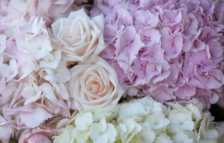Photo wallpaper macro, roses, hydrangea