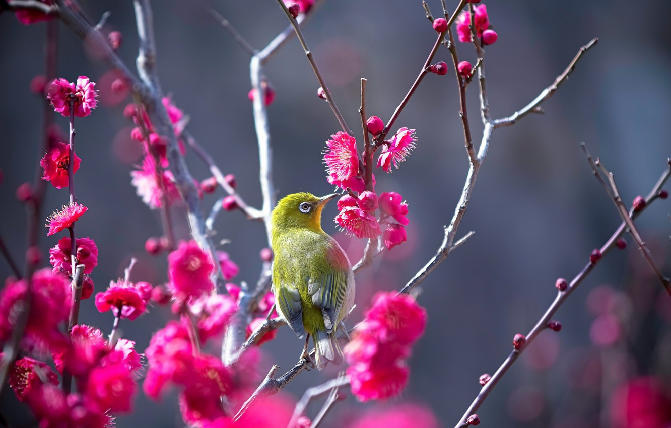 Photo wallpaper nature, tree, bird