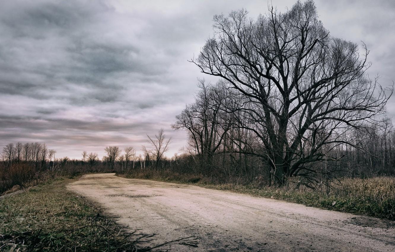 Photo wallpaper road, the sky, tree