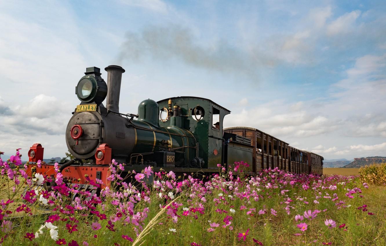 Photo wallpaper flowers, England, the engine, meadow, kosmeya
