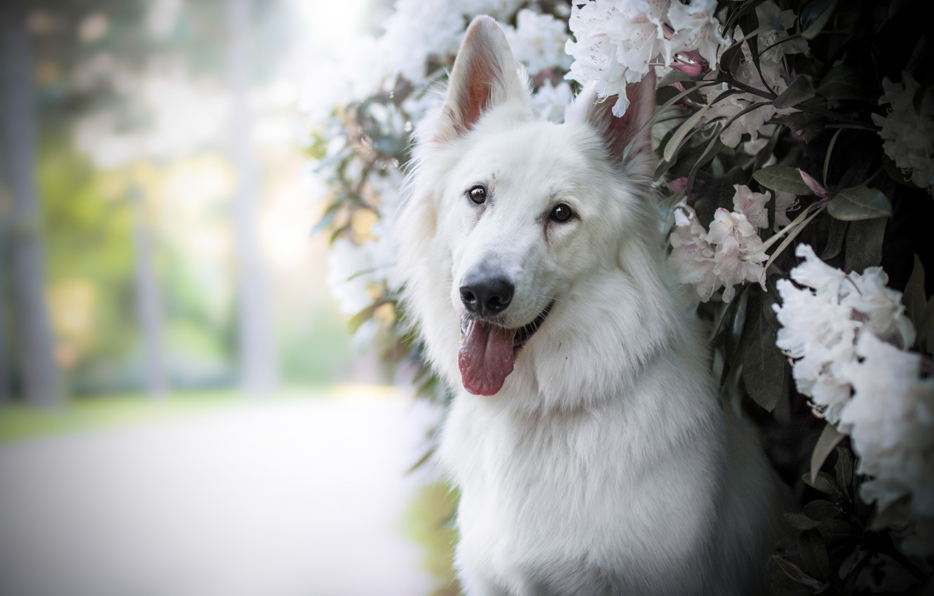 Photo wallpaper flowers, each, dog
