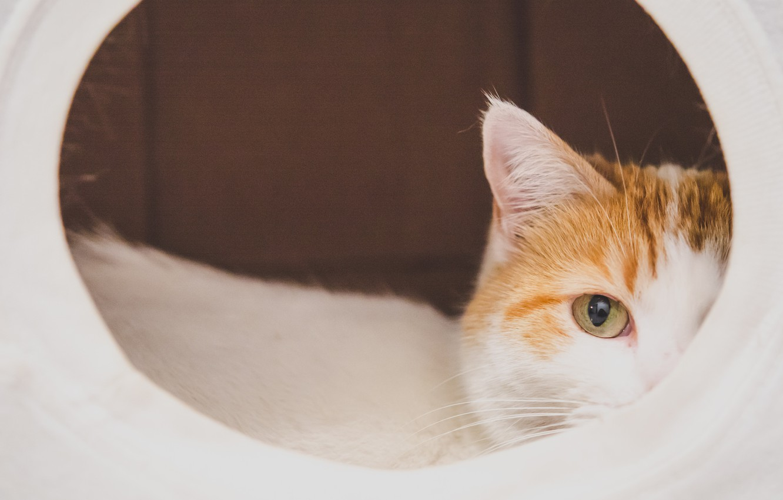 Photo wallpaper cat, eyes, looks