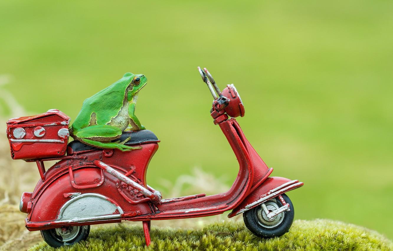 Photo wallpaper macro, background, frog, moped