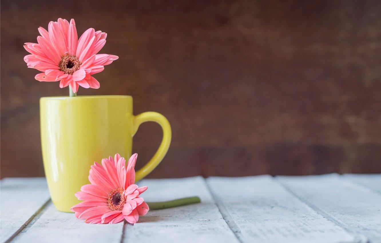 Photo wallpaper flowers, mug, chrysanthemum, wood, pink, flowers, mug