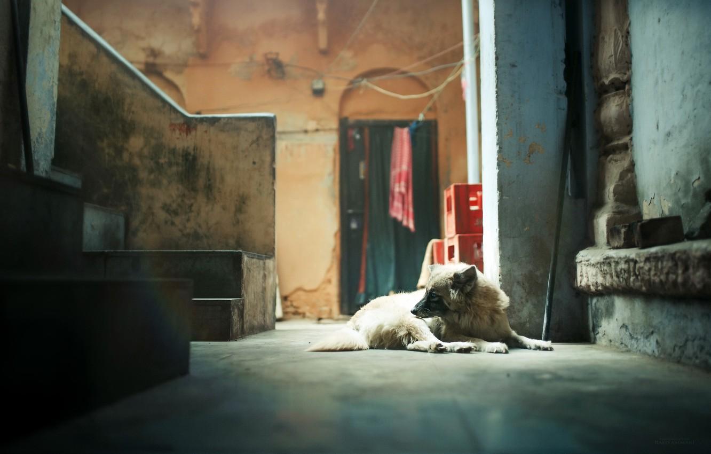 Photo wallpaper house, room, dog