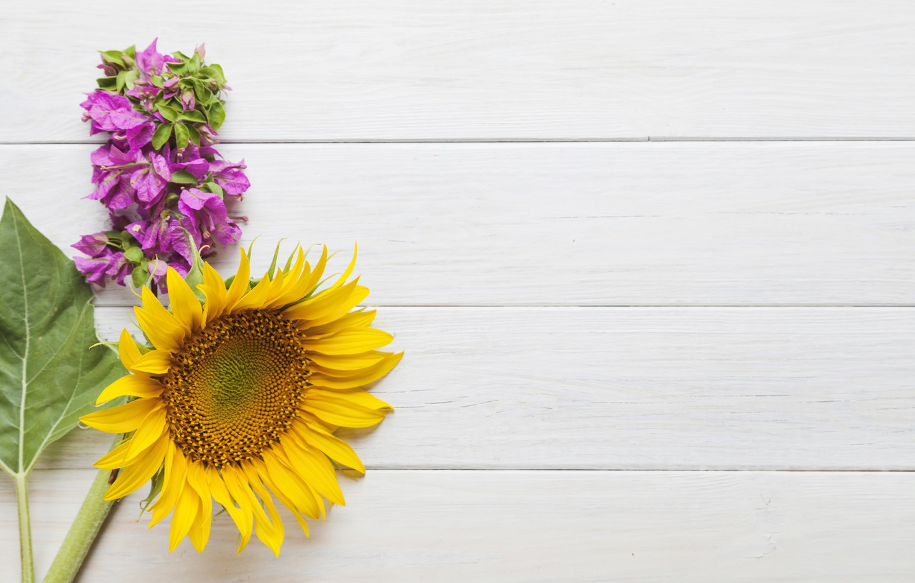 Photo wallpaper flowers, background, sunflower