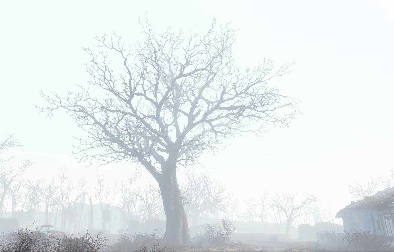 Photo wallpaper fallout, tree, fallout 4