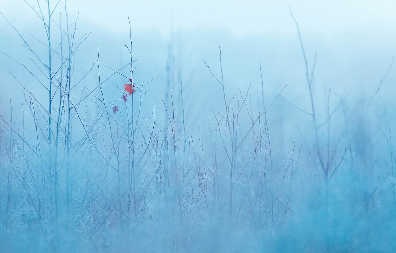 Photo wallpaper nature, sheet, fog