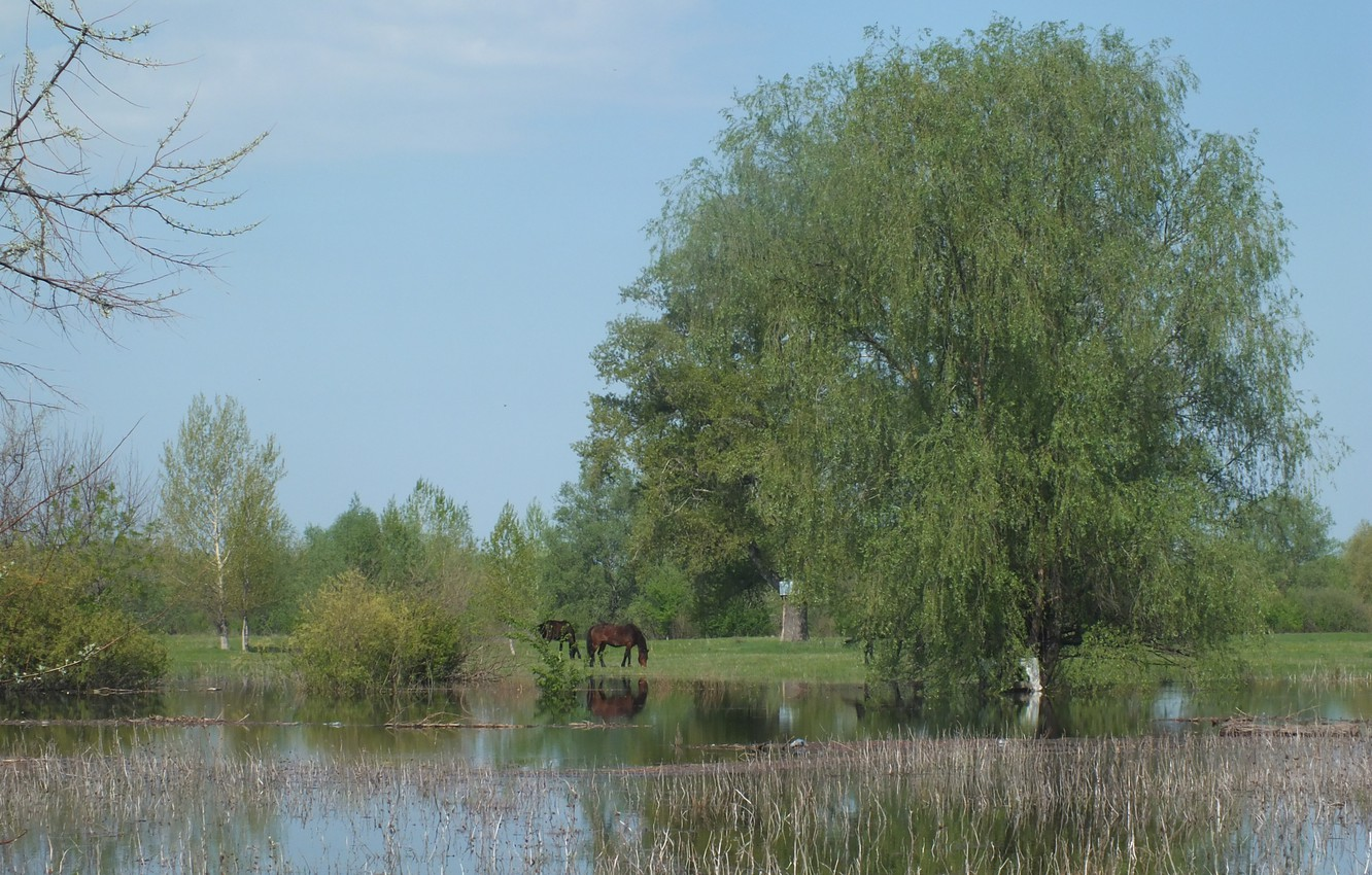 Photo wallpaper forest, trees, horses, spring, spill, horse, nature