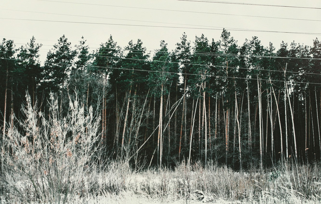 Photo wallpaper cold, winter, greens, forest, the sky, trees, landscape, pine