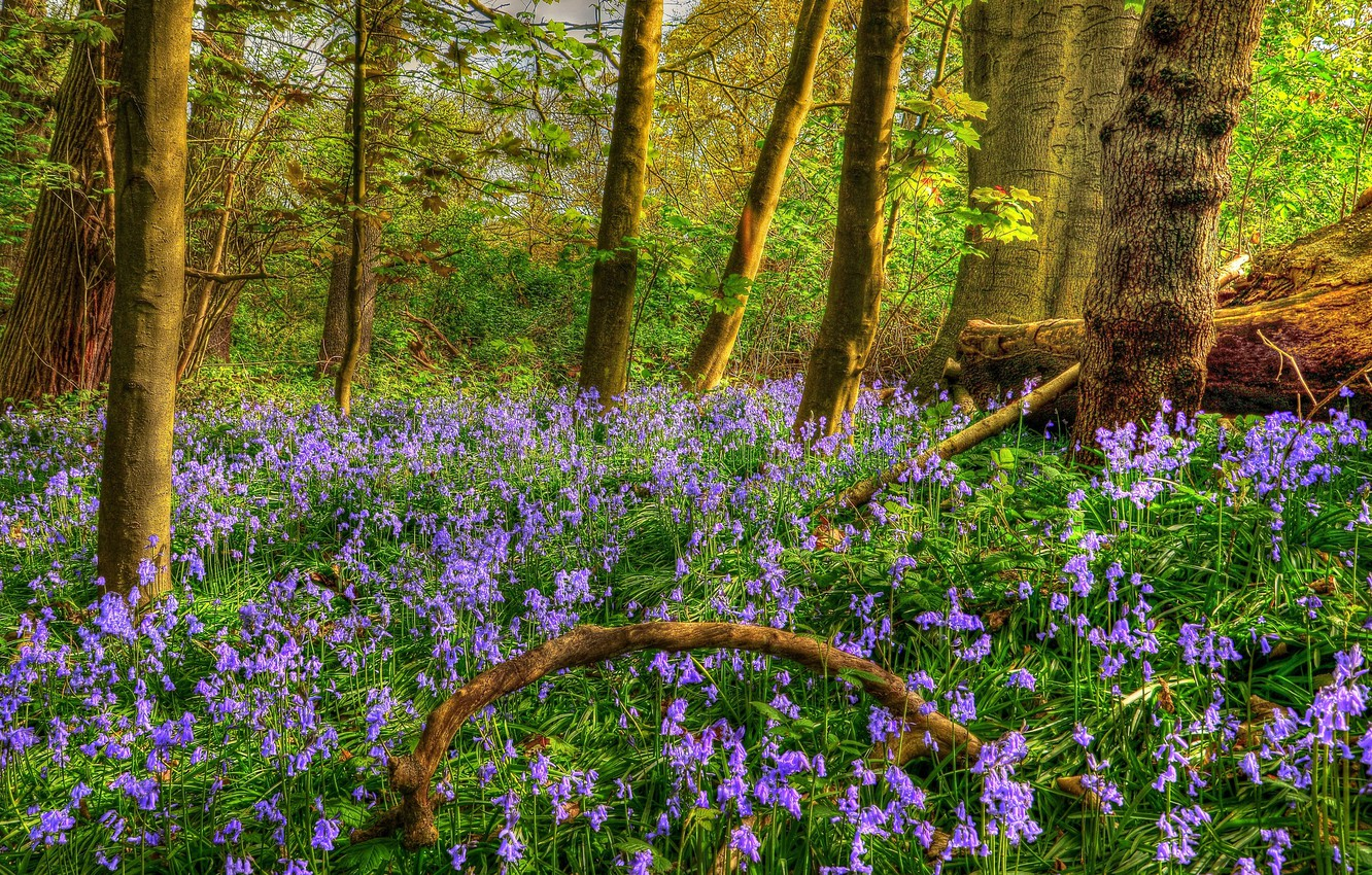 Photo wallpaper forest, trees, flowers, HDR, spring, bells, Spring, Forests