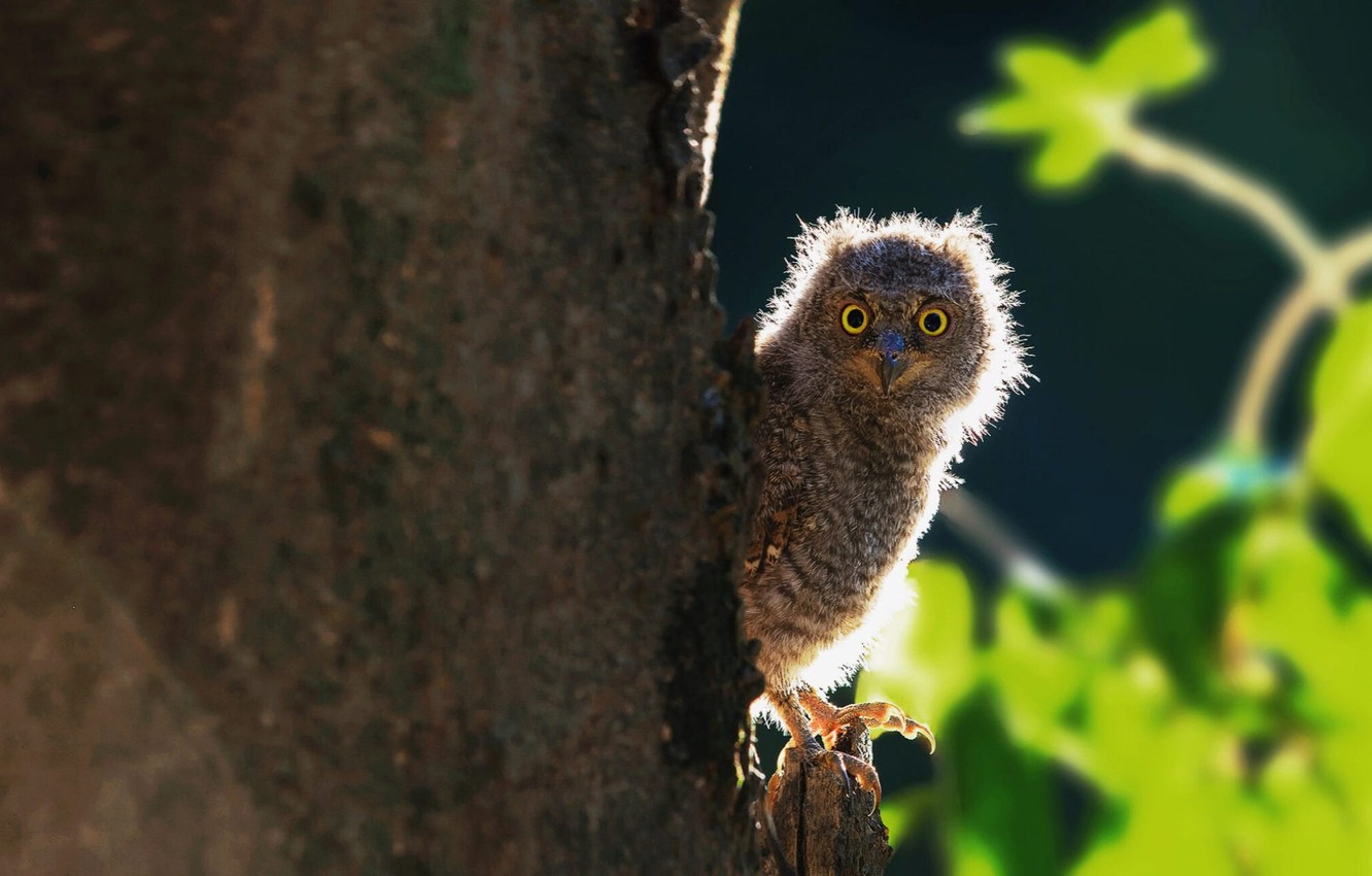 Photo wallpaper blurred background, owlet, the trunk of the tree