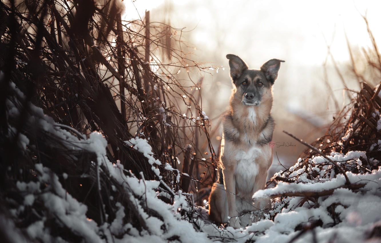 Photo wallpaper winter, look, dog