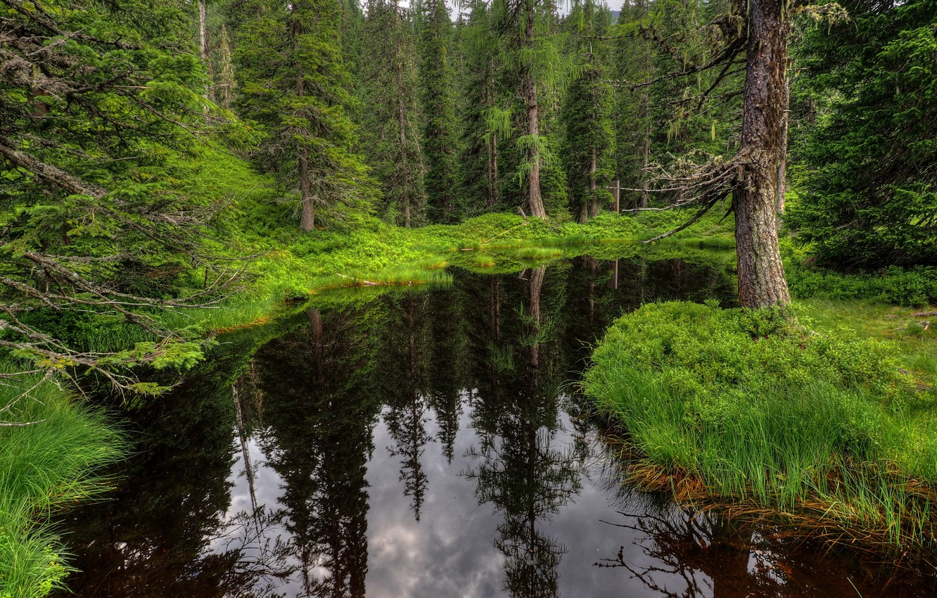 Photo wallpaper Greens, Water, Forest, Green, Forest, Dark waters