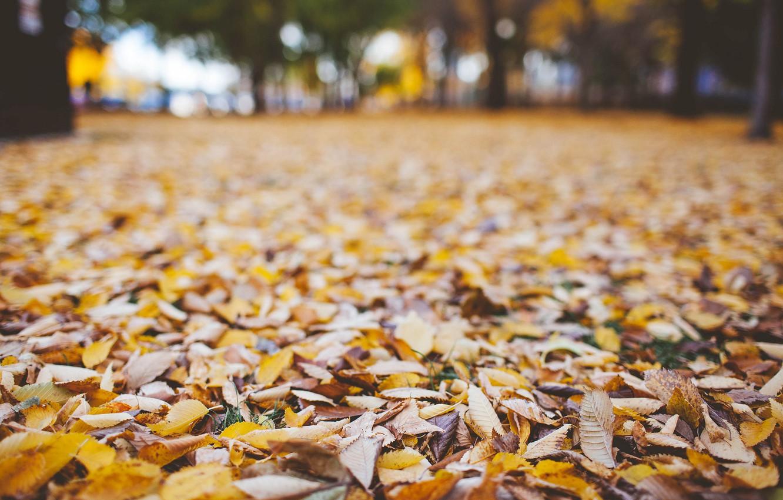 Photo wallpaper autumn, leaves, dry
