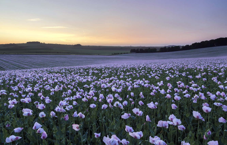 Photo wallpaper field, sunset, Maki
