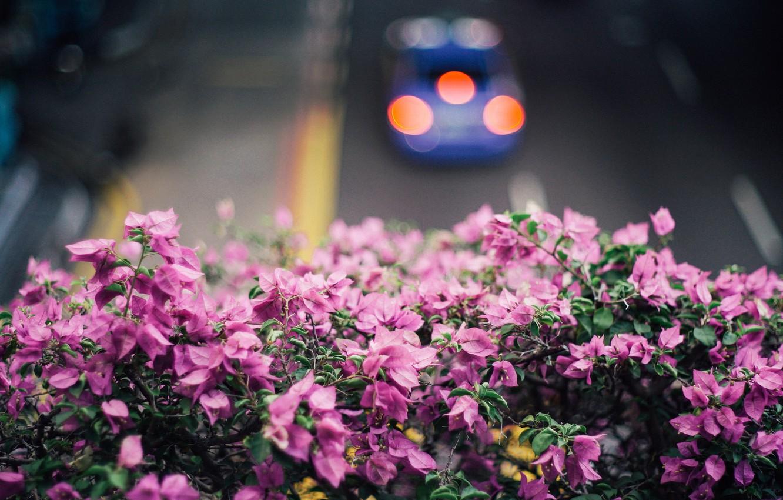 Photo wallpaper flowers, petals, pink, bougainvillea