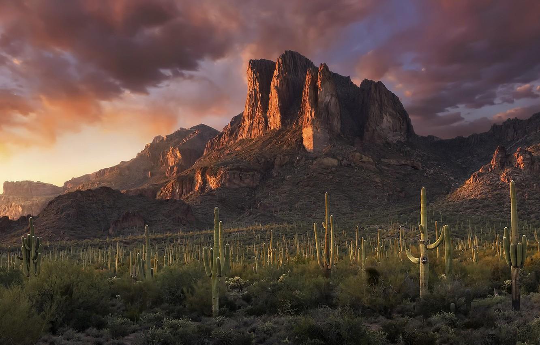 Photo wallpaper sunset, mountains, cacti
