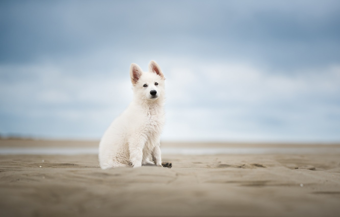 Photo wallpaper sand, the sky, dog, puppy, bokeh
